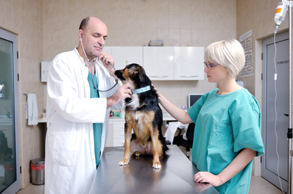 Fotolia - #38570791 - veterinarian and assistant in a small animal clinic © .shock