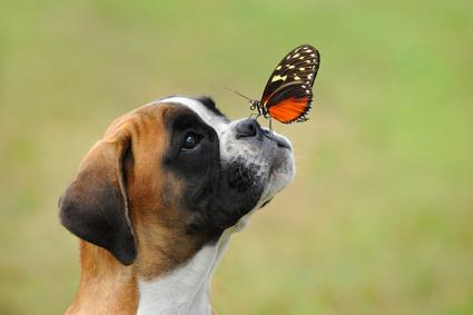 vorhautkatarrh hund symptome