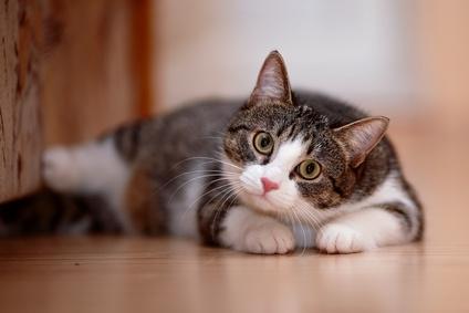 blasenentzündungen bei katzen